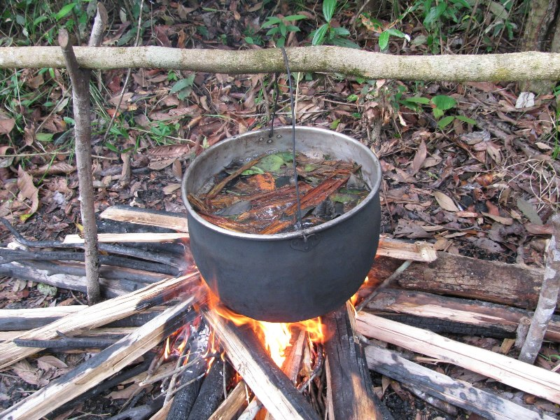 Ayahuasca chemical may treat diabetes