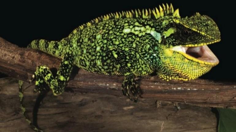 Three lizard species discovered in Peru and Ecuador