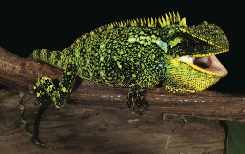 Three lizard species discovered in Peru and Ecuador