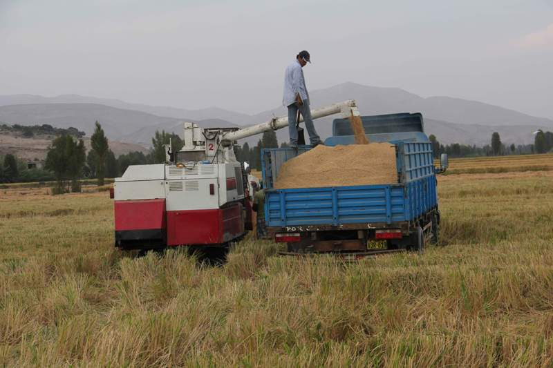 Tia Maria protests to pause for rice harvest