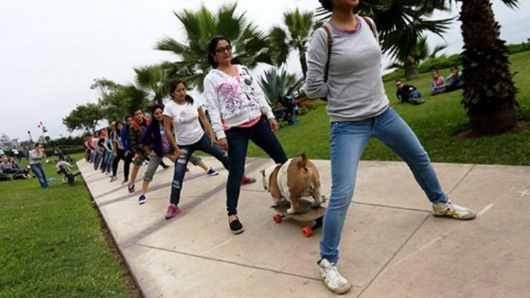 Skateboarding dog sets record in Lima, Peru