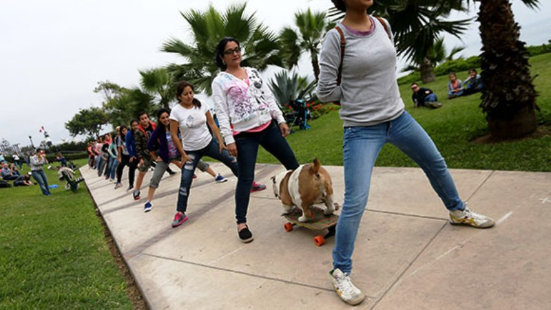 Skateboarding dog sets record in Lima, Peru