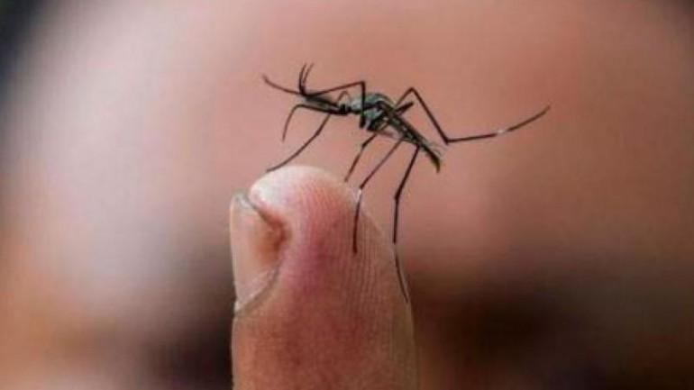 Northern Peru braces for mosquito-borne Zika virus