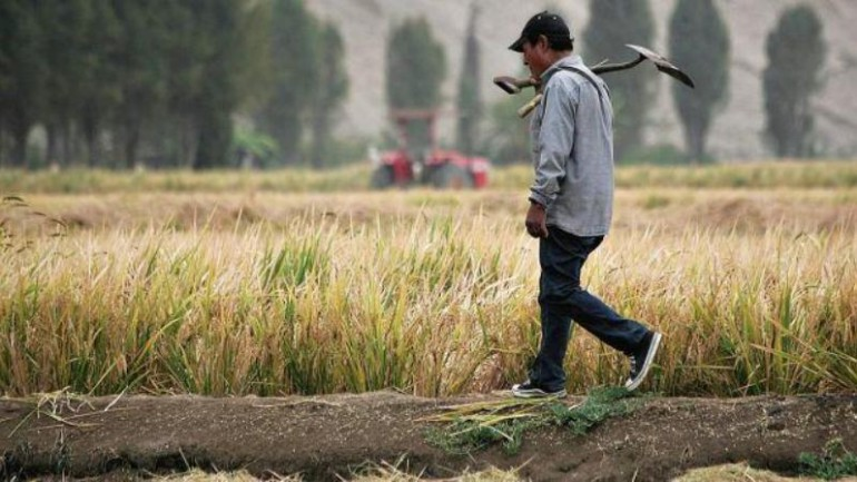 El Niño droughts affect harvests in southern Peru