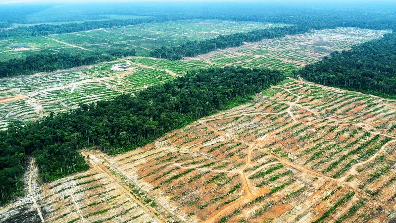 Peru and cocoa firm in legal spat over Amazon plantations