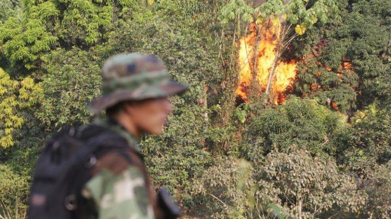 Peru govt touts eradication efforts after coca reduction
