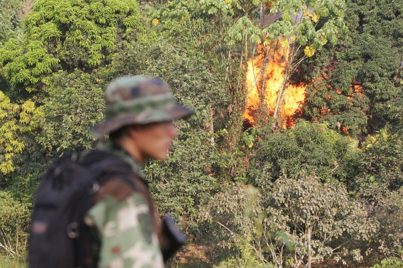 Peru govt touts eradication efforts after coca reduction