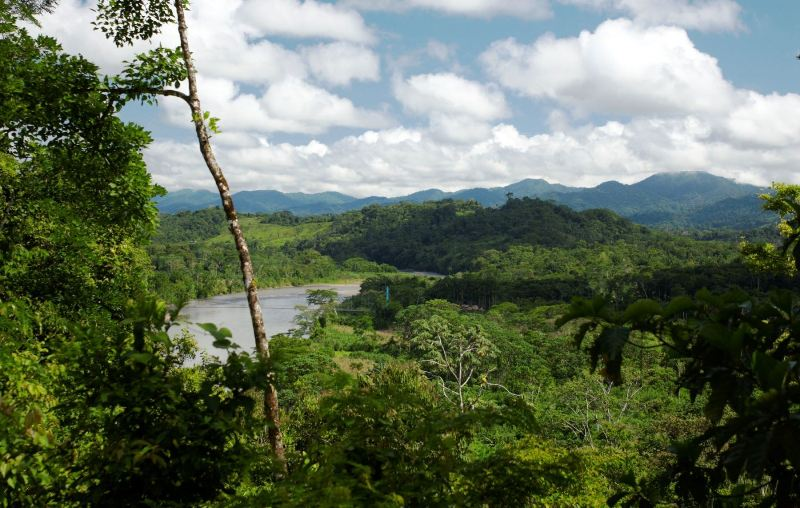 Peru earns millions from REDD+ programs to stop deforestation