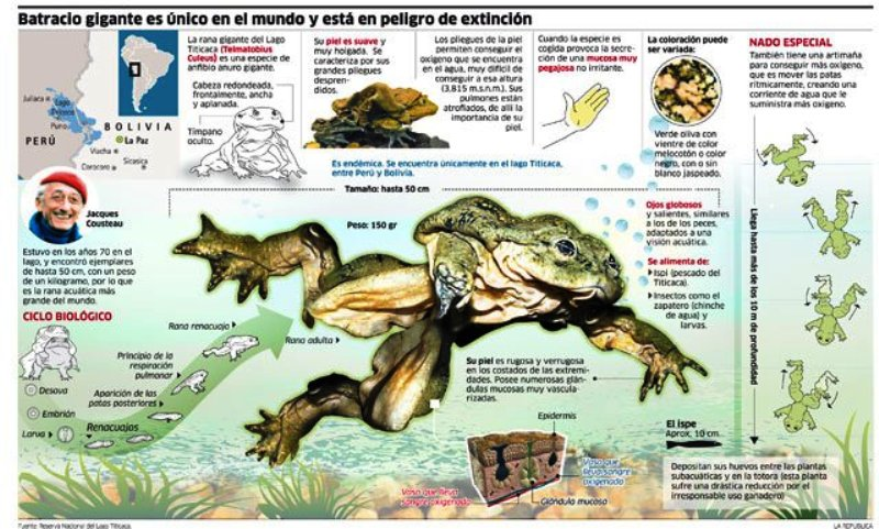 Pollution suspected in deaths of 10,000 endangered frogs in Peru