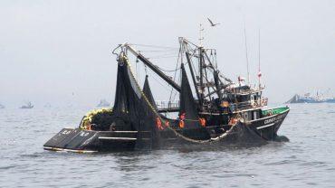 Peru's fishing sector grows despite coastal El Niño