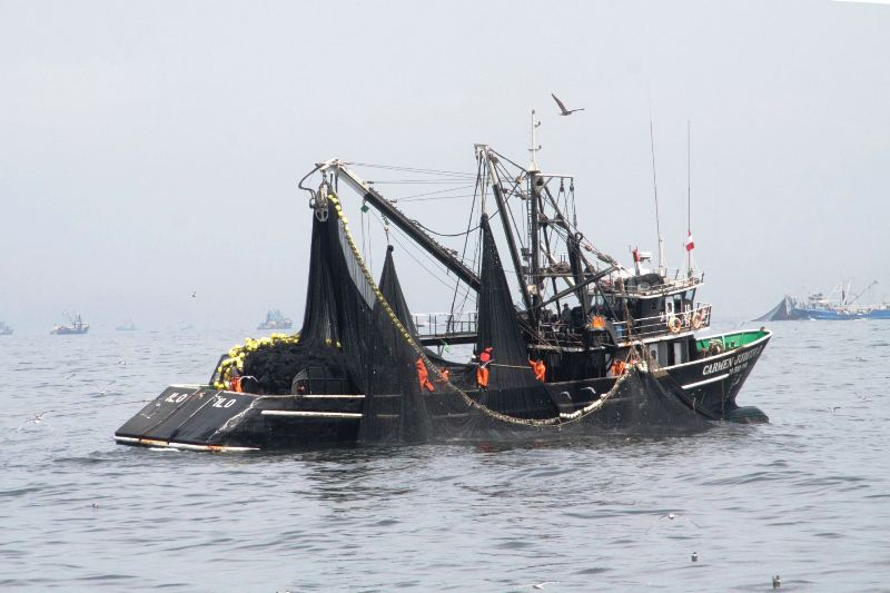 Peru's fishing sector grows despite coastal El Niño