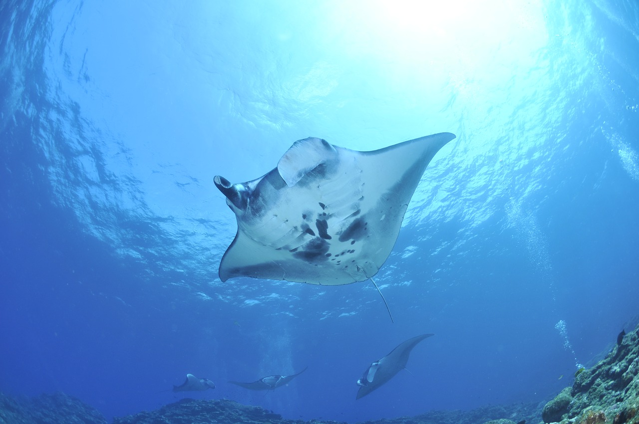 Peruvian Biologist wins the 'Green Oscar' award for her work with manta rays