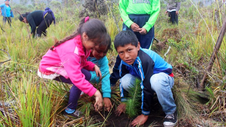 Peru reforestation campaign helps thousands out of poverty