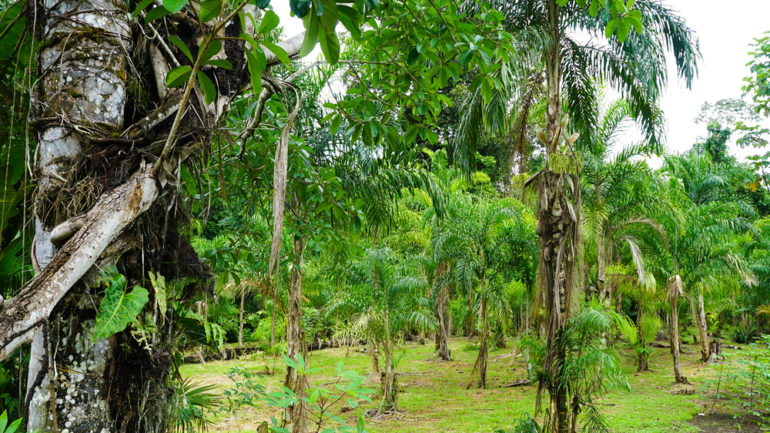 Ecuador's Yasuni National Park faces mounting deforestation from oil drilling