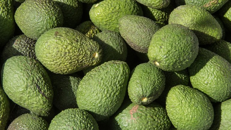Peru continues to make its mark with avocado exports
