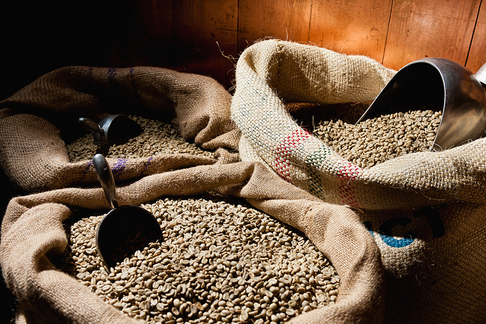 Peru's Cajamarca region becomes leading coffee exporter in the country