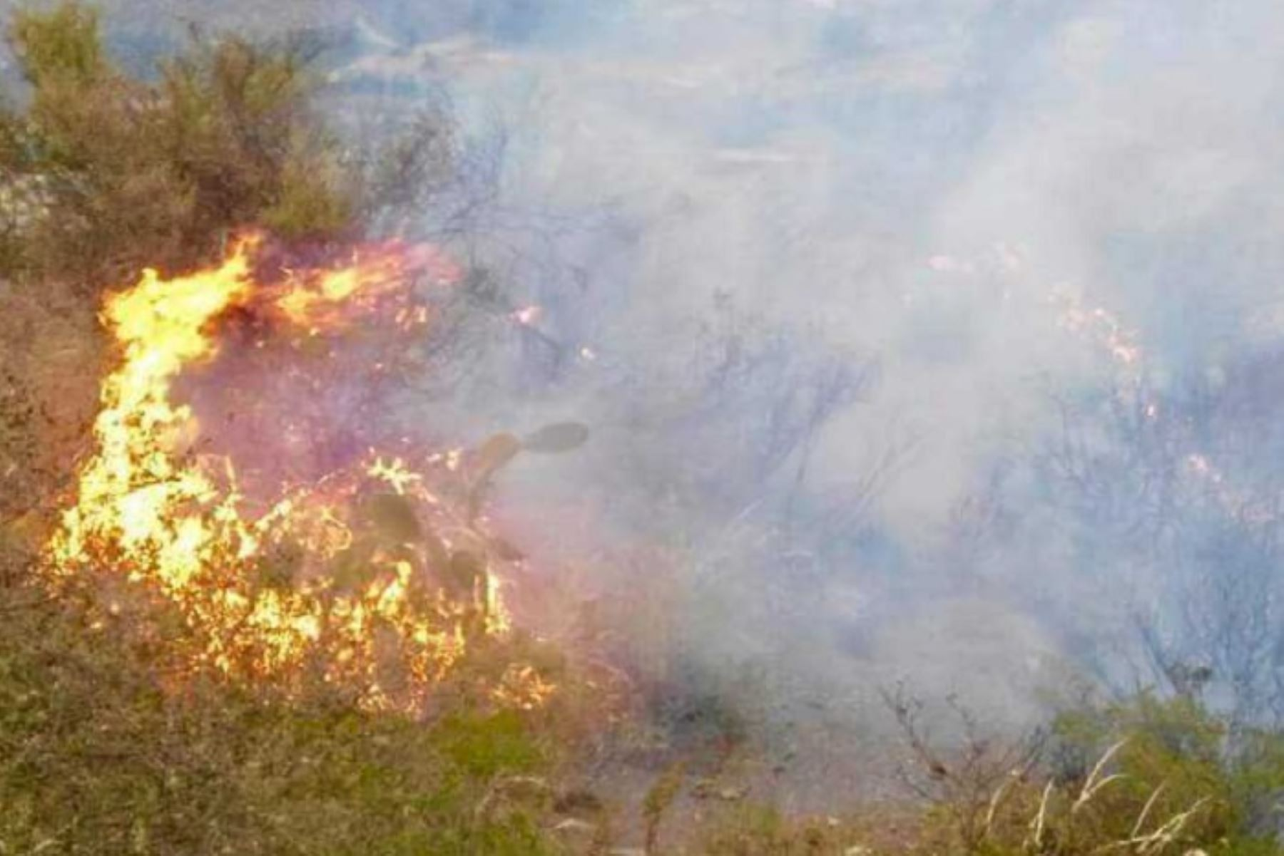 Peru passes forest fire prevention plan as the disaster threat increases